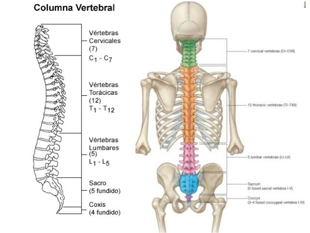 El dolor en la espalda periódico