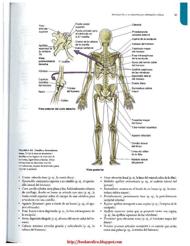 Perfecto Descargar La Anatomía Con Orientación Clínica Patrón ...