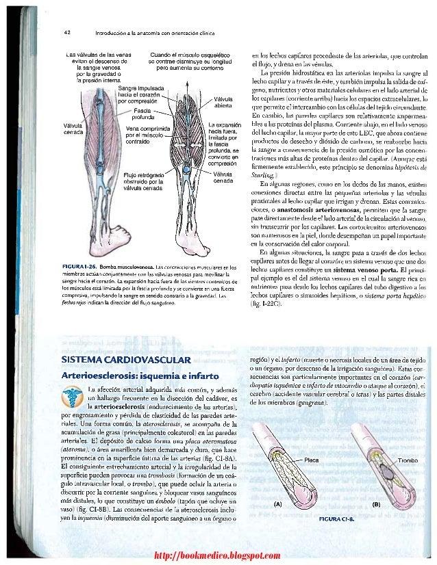 Anatomia humana con orientacion clinica moore httpbookmedicospot ccuart Gallery