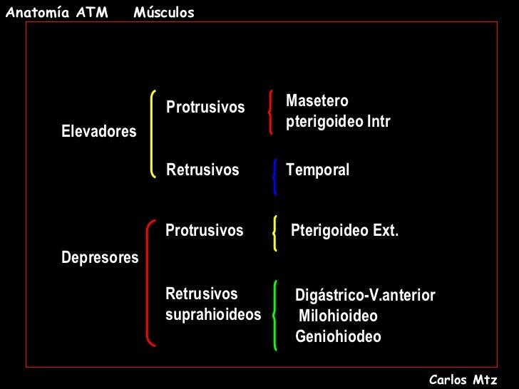 ANATOMIA DE ATM