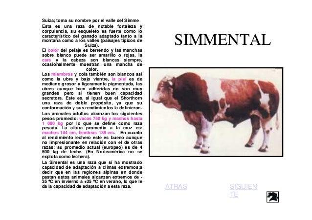 Anatomia de-bovino