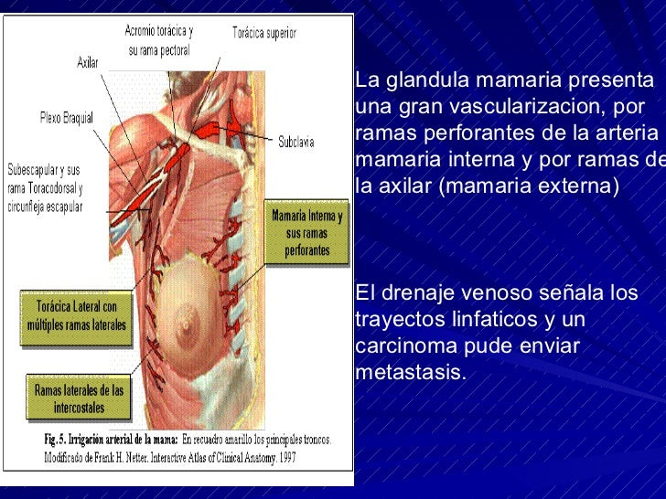 Anatomia De La Mama Y La Axila