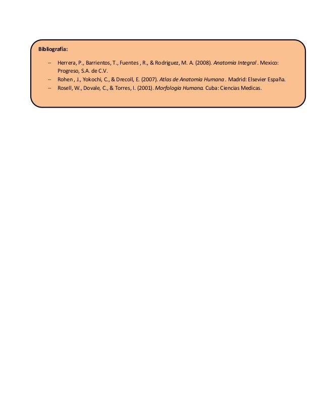 Anatomia de-la-piel