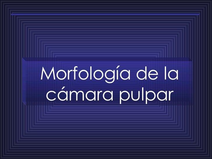 Morfología de la cámara pulpar