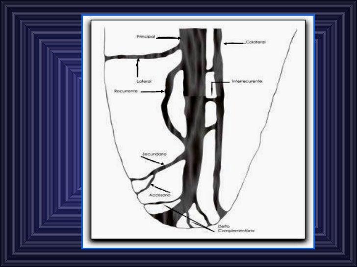 Anatomia De Los Conducto Radiculares F