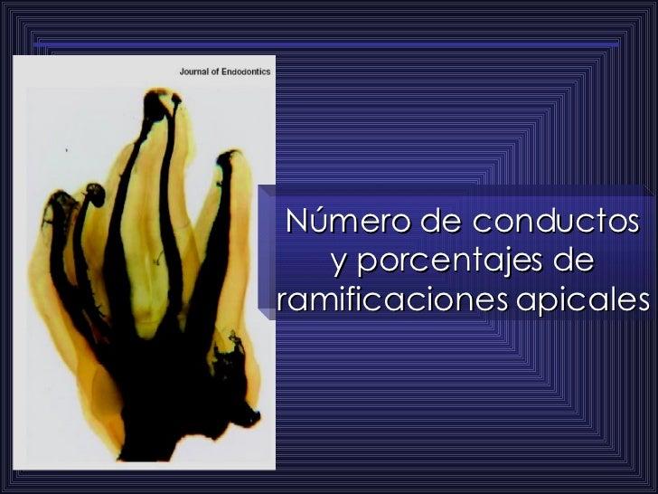 Número de conductos y porcentajes de ramificaciones apicales