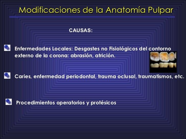 Modificaciones de la Anatomía Pulpar CAUSAS: Enfermedades Locales: Desgastes no Fisiológicos del contorno externo de la co...