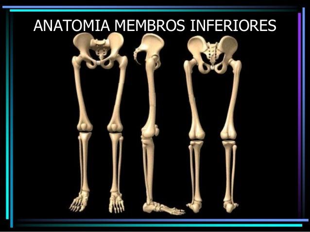 ANATOMIA MEMBROS INFERIORES