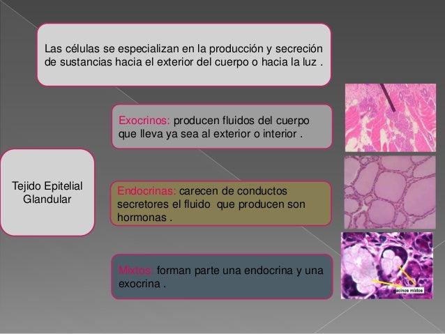 Anatomia definicion de diego narvaez