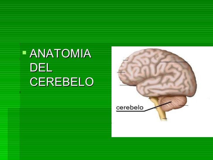 <ul><li>ANATOMIA DEL CEREBELO </li></ul>