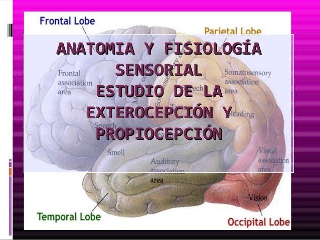 ANATOMIA Y FISIOLOGÍA      SENSORIAL    ESTUDIO DE LA   EXTEROCEPCIÓN Y    PROPIOCEPCIÓN