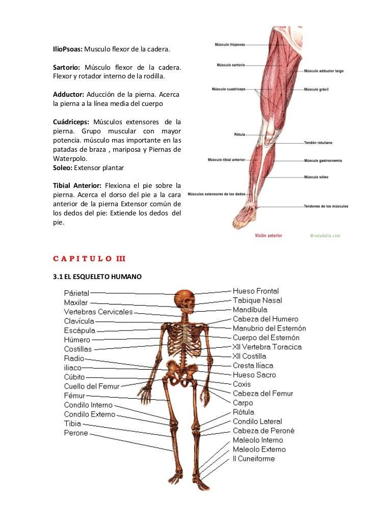 Asombroso Elementos Esenciales De Pearson De Anatomía Y Fisiología ...