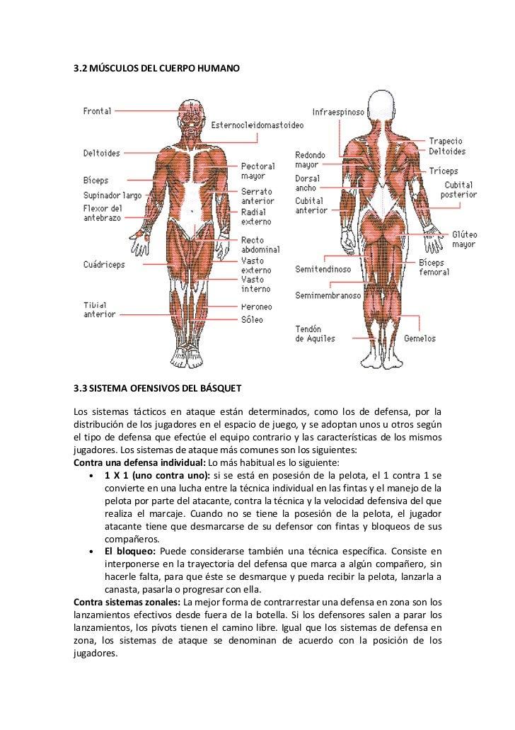 Asombroso El Capítulo 5 Del Esqueleto Anatomía Del Sistema Y La ...