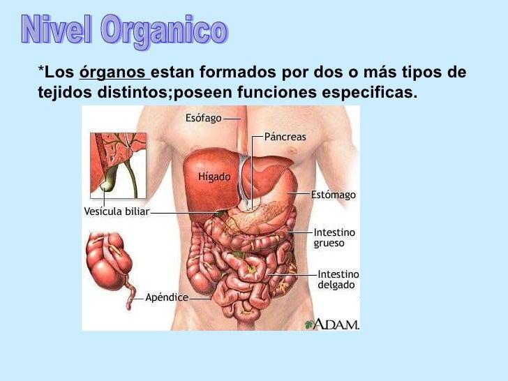 Anatomia fisiologia 1