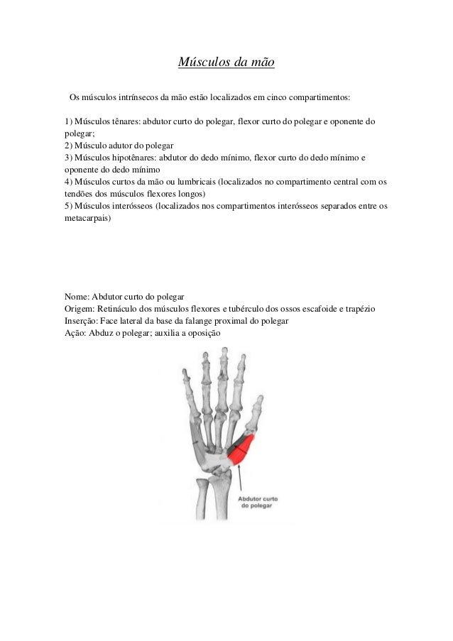 Encantador Anatomía De Un Dedo Ornamento - Imágenes de Anatomía ...
