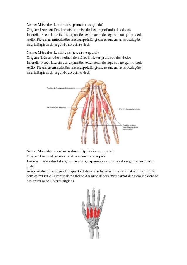 Lujoso Anatomía Quinto Dedo Adorno - Anatomía de Las Imágenesdel ...