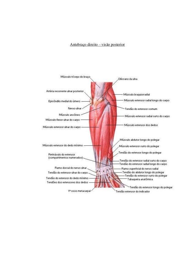 Asombroso Anatomía De Los Dedos Viñeta - Imágenes de Anatomía Humana ...