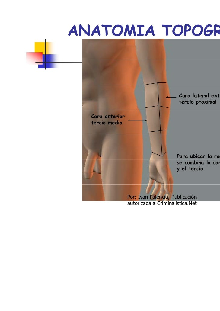 Anatomia forense ivanpalencia2