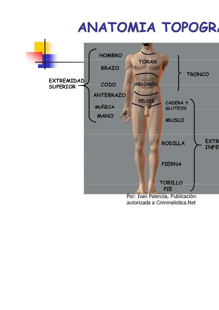 Hermosa Hombro Anatomía Lesión Cresta - Imágenes de Anatomía Humana ...
