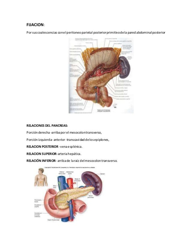 Anatomia higado-bilis-pancreas