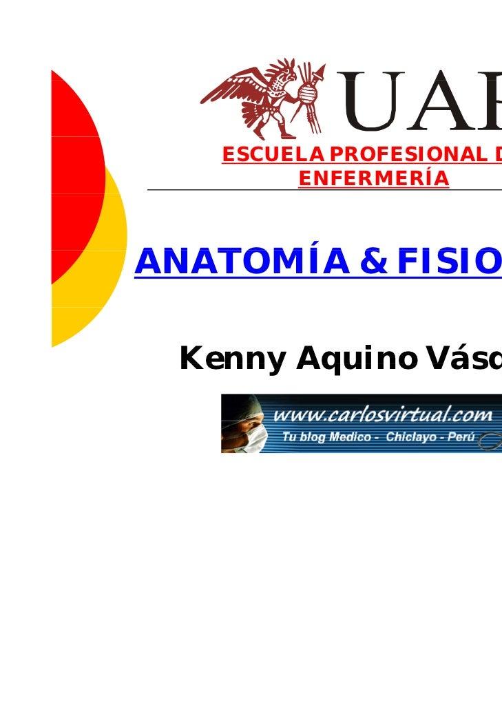 ESCUELA PROFESIONAL DE        ENFERMERÍAANATOMÍA & FISIOLOGÍA Kenny Aquino Vásquez