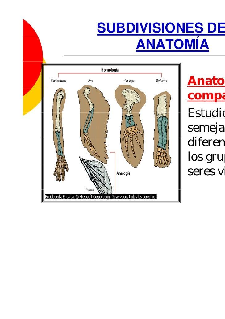 Anatomia introduccion
