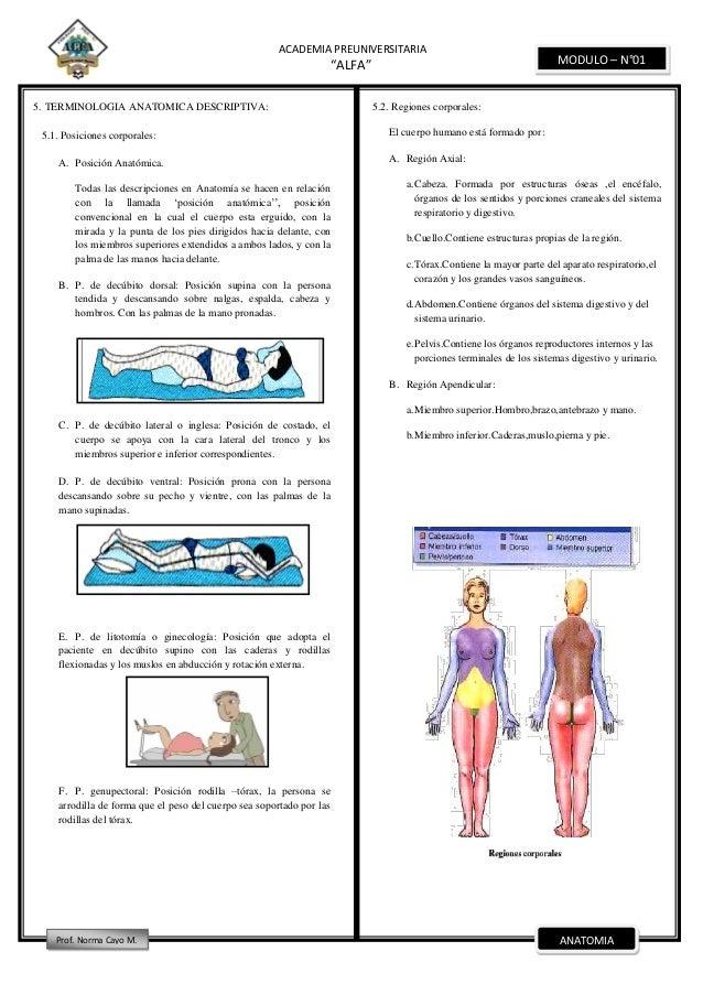 Anatomia modulo-i