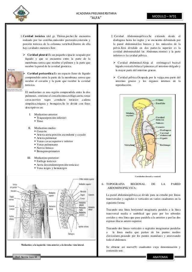 Encantador Ingle Anatomía Humana Ilustración - Imágenes de Anatomía ...