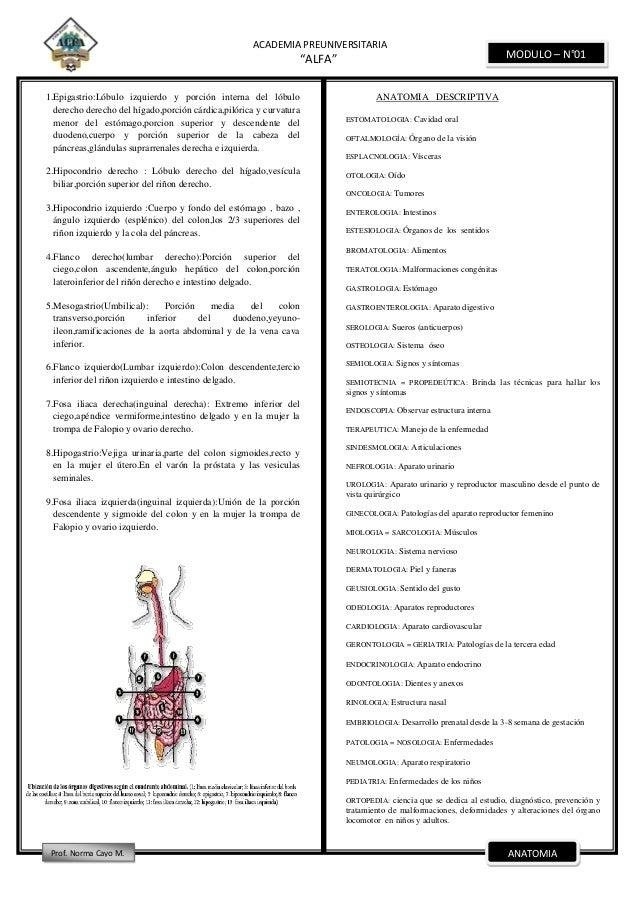 Dorable Lóbulos De La Próstata Anatomía Ornamento - Imágenes de ...