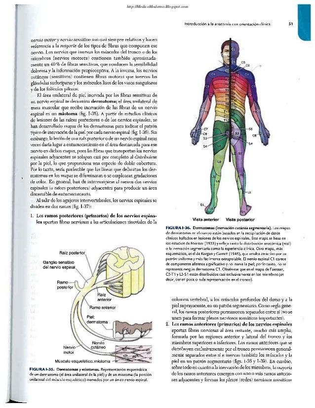 Anatomia Moore...