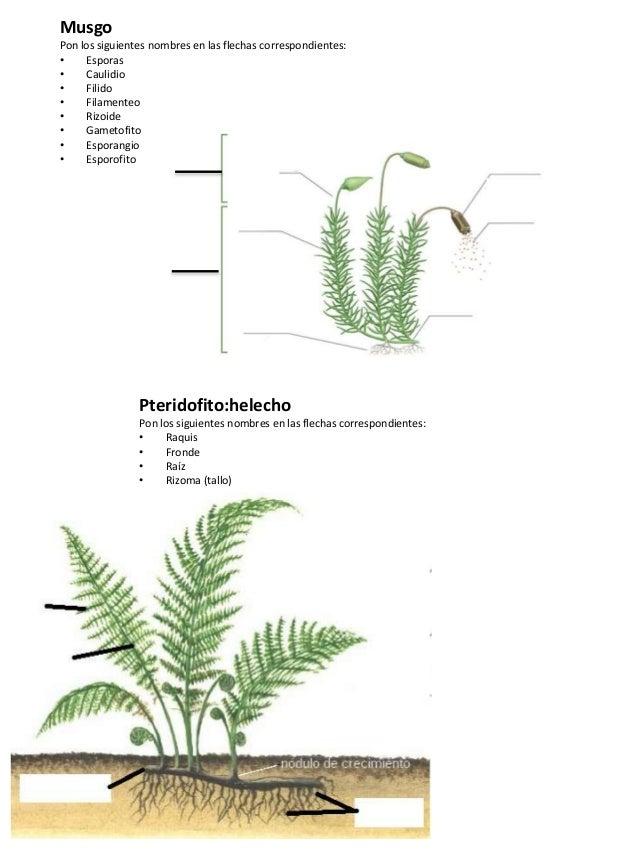 Anatomia plantas