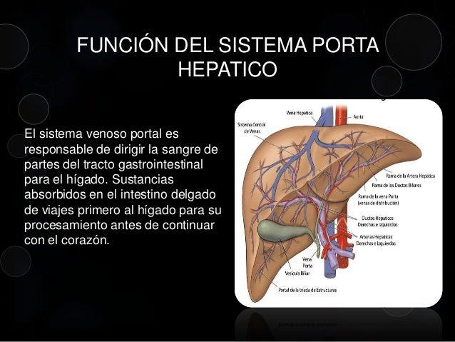 Anatomia sistema-porta