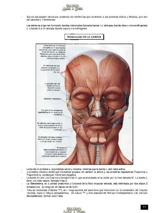 Dorable Ver La Anatomía De Un Asesino En Línea Adorno - Imágenes de ...