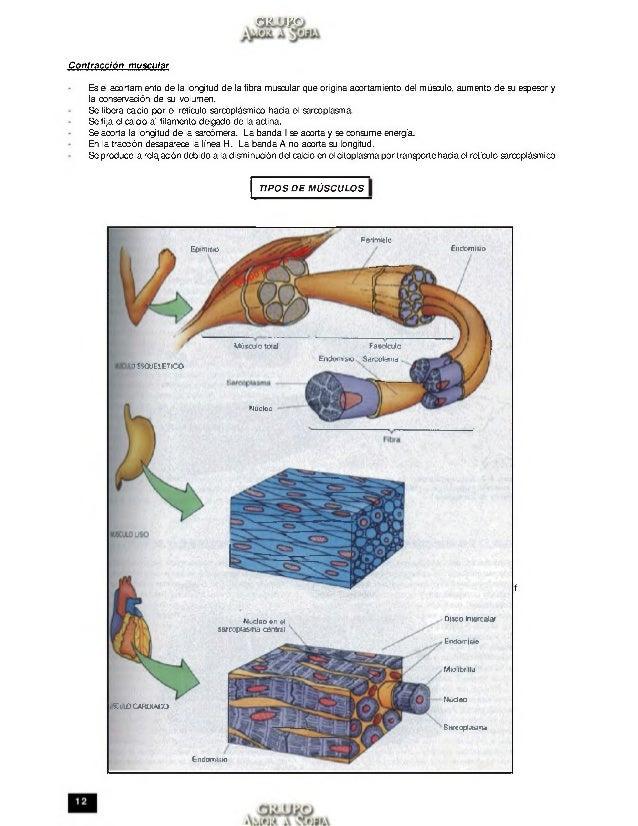 Anatomia trilce