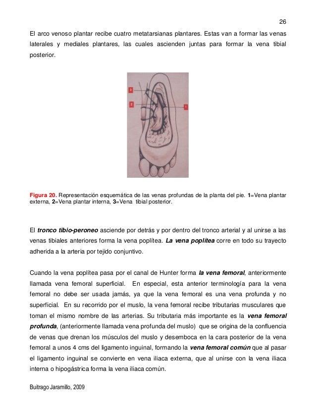 Vistoso Esponja Diagrama Anatomía Externa Bosquejo - Imágenes de ...