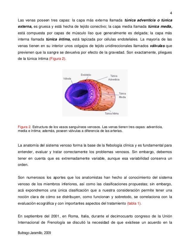 Asombroso Anatomía De Esponja Componente - Imágenes de Anatomía ...