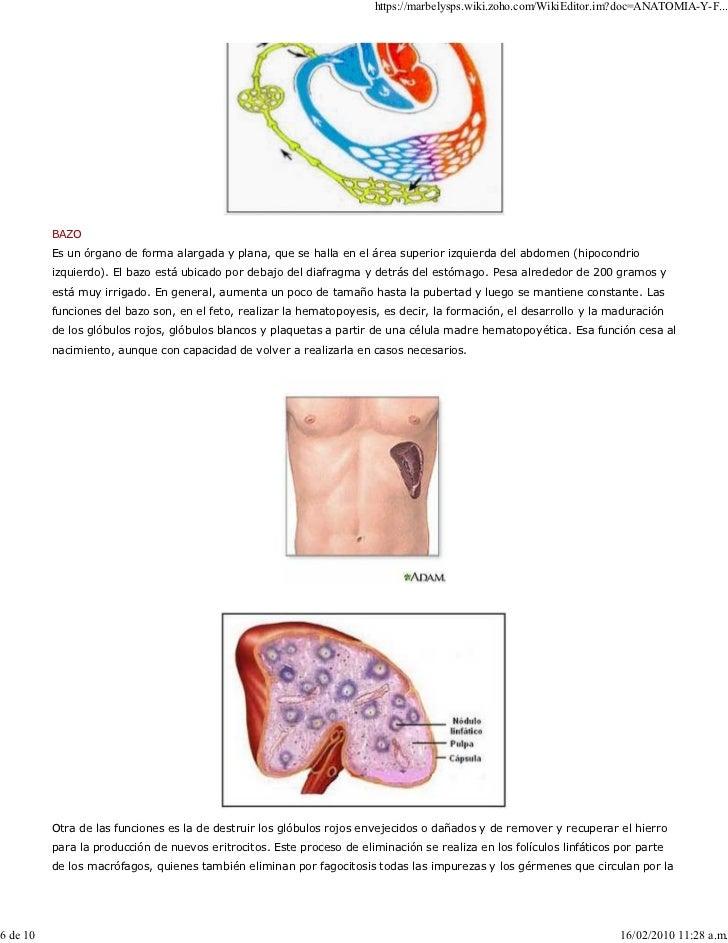 Hermosa Anatomía Y Fisiología Del Sistema Linfático Adorno ...