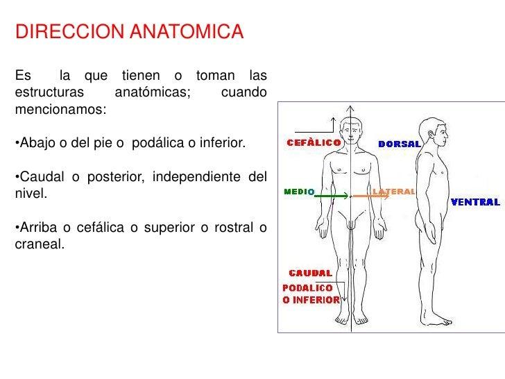 Perfecto Definir Dorsal En La Anatomía Imagen - Anatomía de Las ...