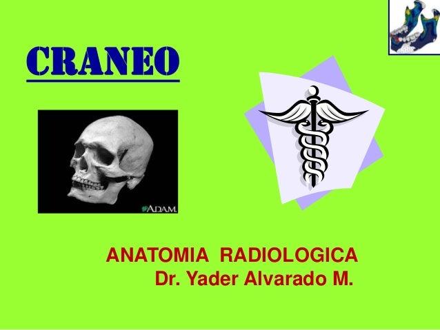 Craneo   ANATOMIA RADIOLOGICA       Dr. Yader Alvarado M.