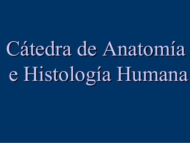 Cátedra de AnatomíaCátedra de Anatomía e Histología Humanae Histología Humana