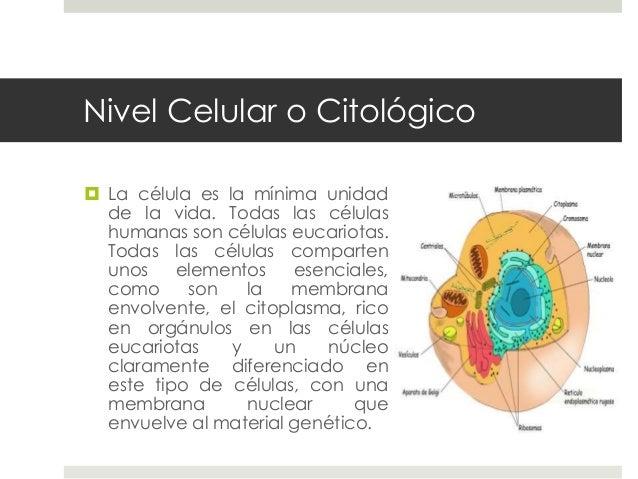 generalidades de la anatomia