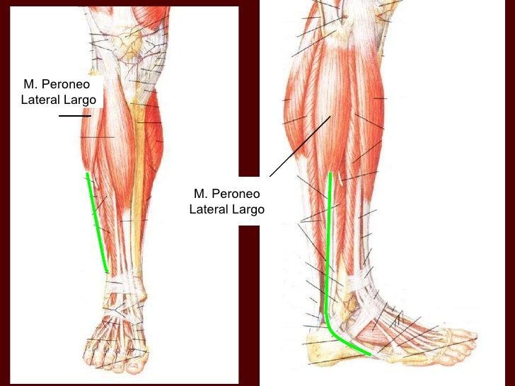 Anatomia2 1211497323331299-9