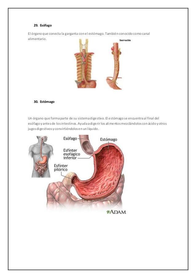 Anatomía- glosario del Sistema Digestivo