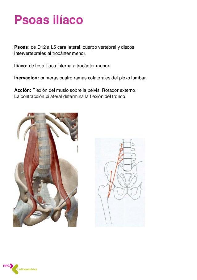 Dorable Trocánter Definición Anatomía Ornamento - Imágenes de ...