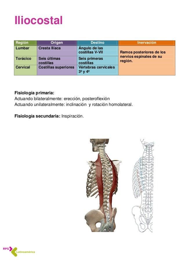 Anatomía 3 Pelvis, huesos articulaciones y medios de unión