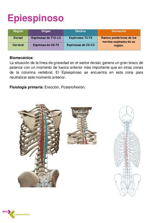 Hermosa Es El Destino Anatomía Motivo - Imágenes de Anatomía Humana ...