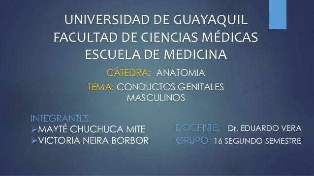 UNIVERSIDAD DE GUAYAQUIL FACULTAD DE CIENCIAS MÉDICAS ESCUELA DE MEDICINA CÁTEDRA: ANATOMIA TEMA: CONDUCTOS GENITALES MASC...