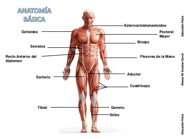 Anatomia 3º