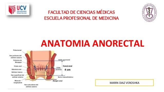 FACULTAD DE CIENCIAS MÉDICAS ESCUELA PROFESIONAL DE MEDICINA ANATOMIA ANORECTAL MARIN DIAZ VEROSHKA