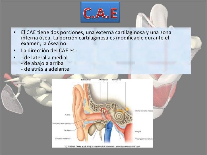 Anatomia aparato auditivo